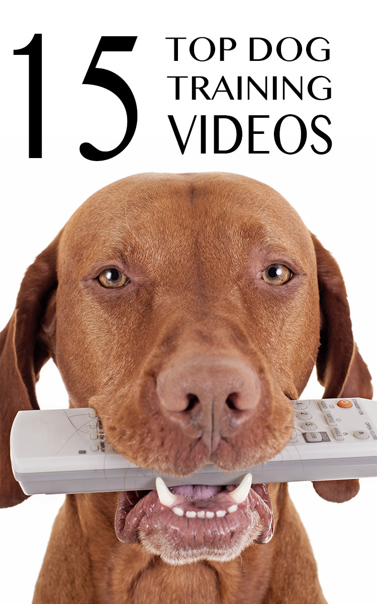 15 Free Top Quality Dog Training Videos - Selected By Pippa