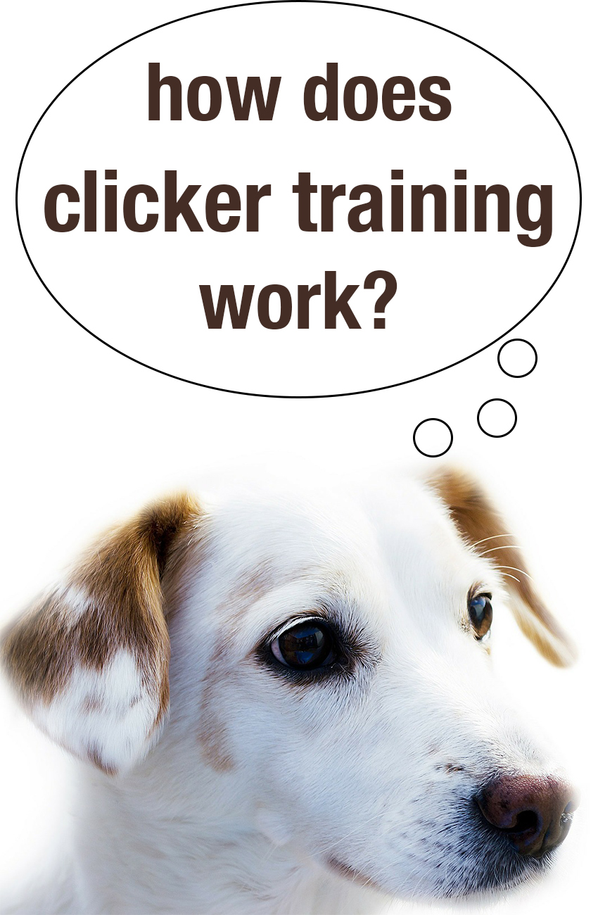 Find out how clicker training works, and how it can help you train your dog