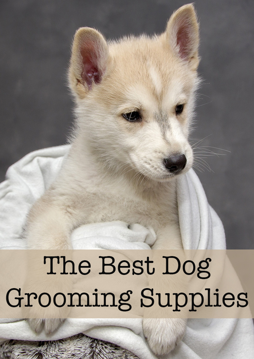 A selection of our favorite dog grooming supplies and products