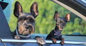 Traditional Dog Training Versus Modern Methods