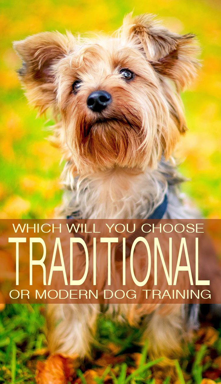 Traditional versus modern dog training. We explain the differences and help you decide.