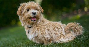 Behavior Chains: Backchaining In Dog Training