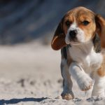 Dog Breed Groups: Different Kinds Of Dog Explained