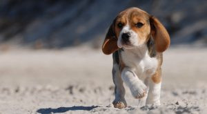 Dog Breed Groups: Different Types Of Dog Explained