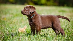 Dog Training Guides – Lessons And Exercises From Pippa Mattinson