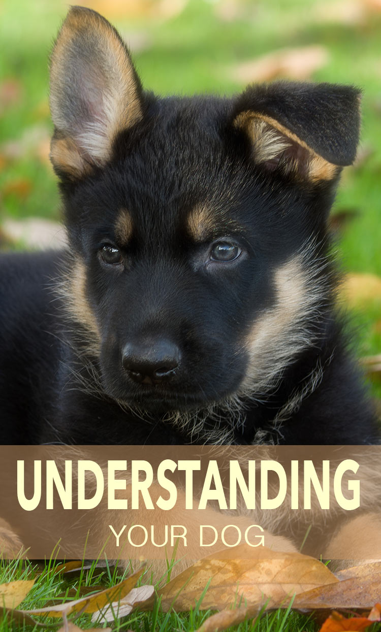 Best selling author Pippa Mattinson brings you a fantastic library of free articles to help you build a great relationship with your dog