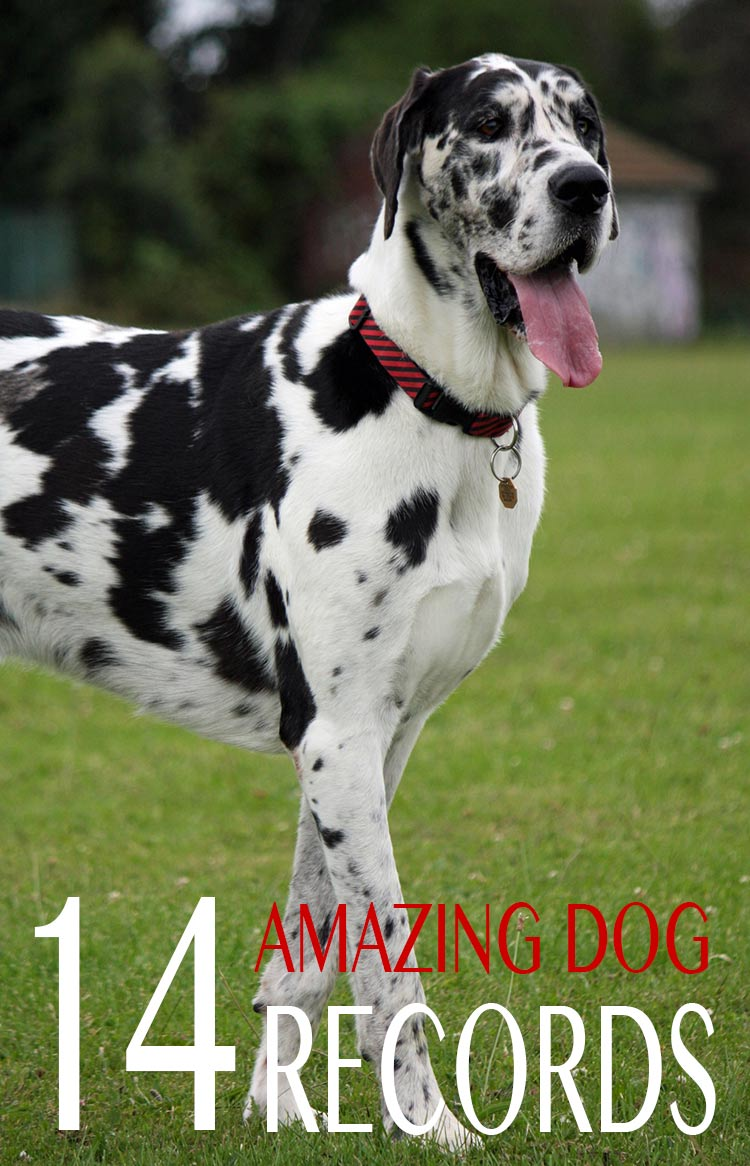 Check out our amazing dog records and record breakers in this article