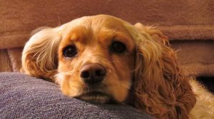 Ear Mites In Dogs – Causes, Symptoms And Treatment