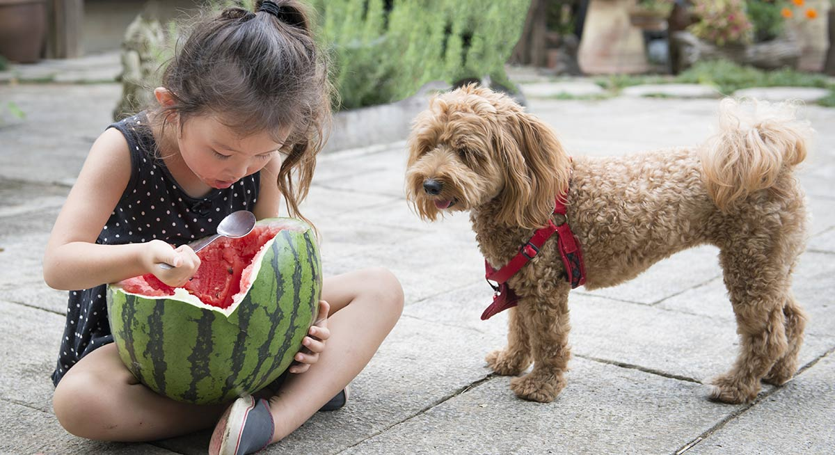 This dog would love to share but can dogs have cantaloupe?