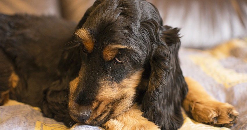 What is counter conditioning? Understanding this important dog training technique, and how it can help our pets to overcome their fears.