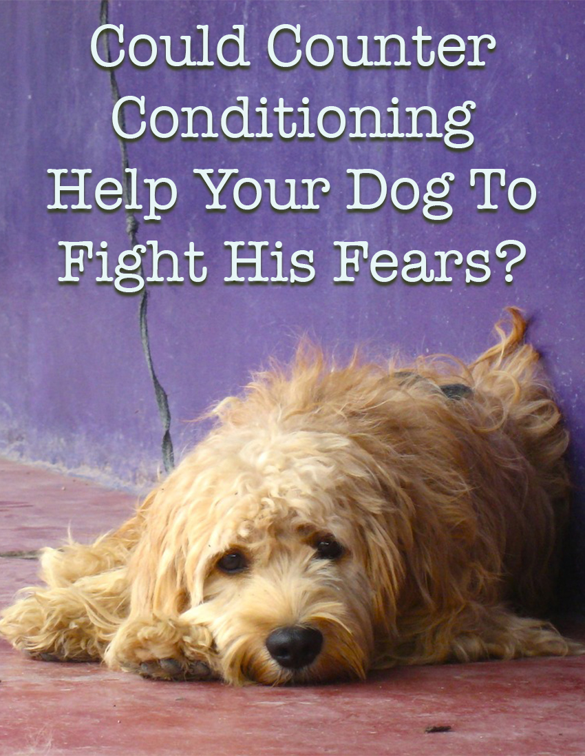 What is counter conditioning in dog training, and how to use it to help your dog fight his fears