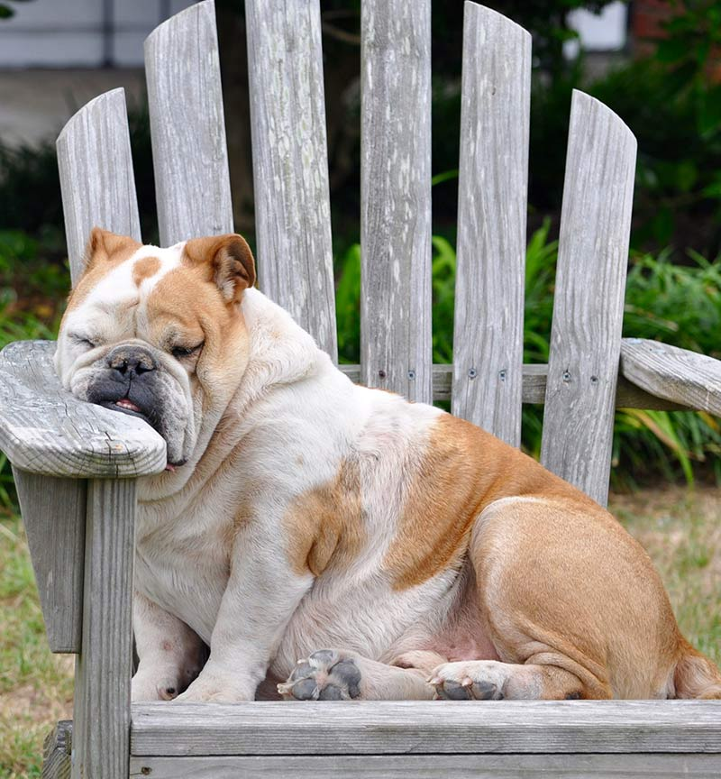 Dog sleeping positions - meaning and purpose of different sleeping styles
