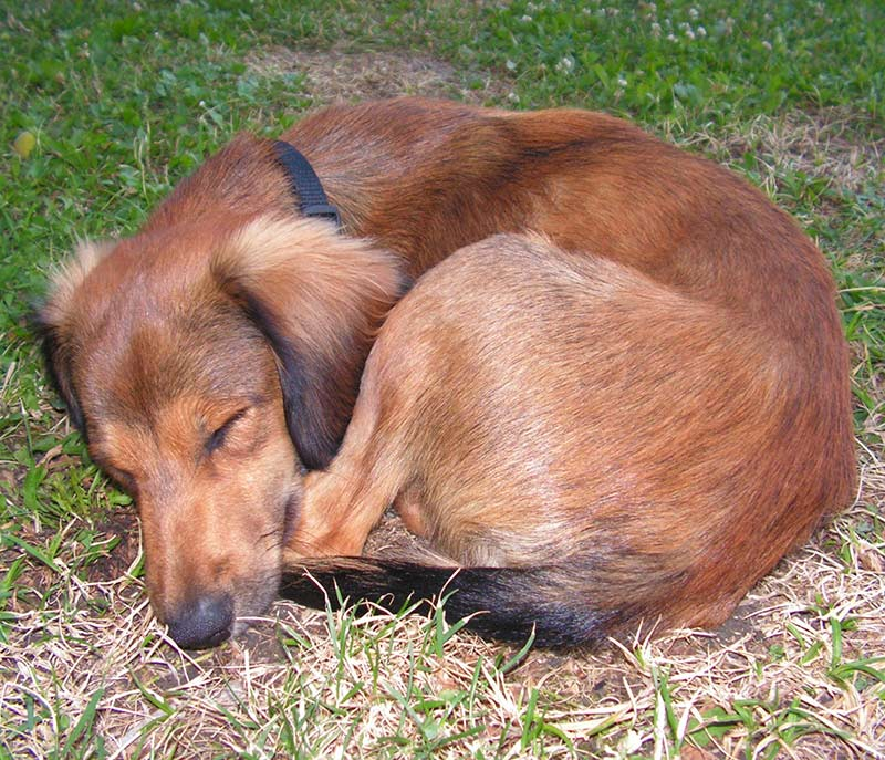 Why do dogs sleep so much? Find out in this fascinating article
