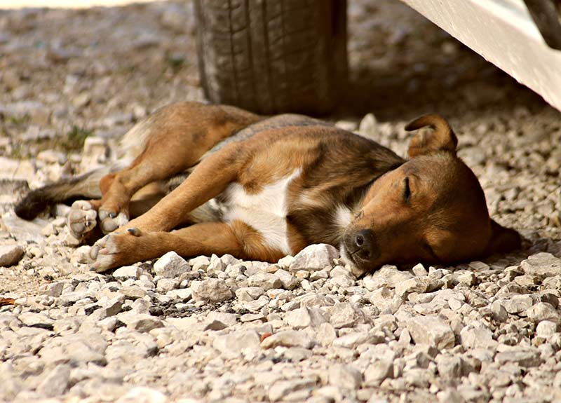 My dog sleeps ALL the time! Worried? Find out what is and isn't normal