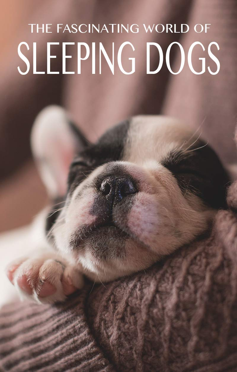Check out our puppy sleep schedule