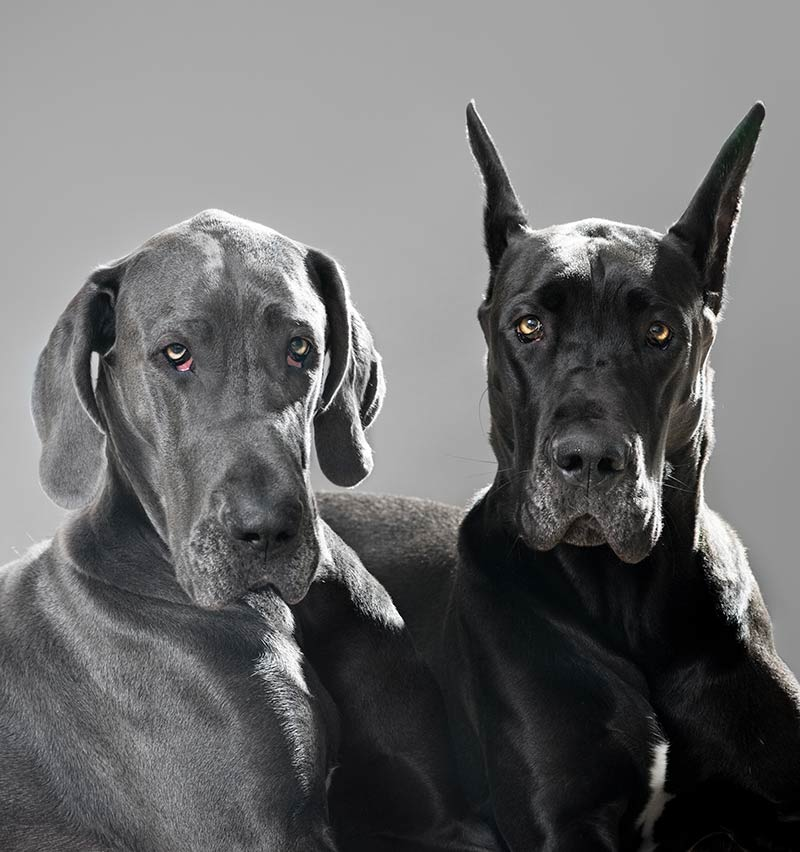 The dog with droopy eyes on the left is more vulnerable to eye infections