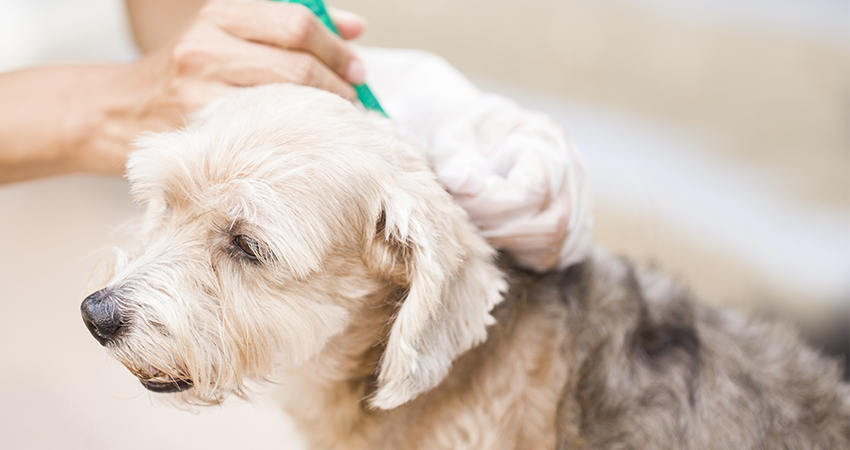 What do ticks look like? A complete guide to identification, removal, treatment and prevention
