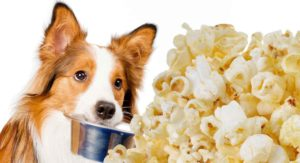Can Dogs Eat Popcorn? Can You Share This Tasty Treat With Your Dog?