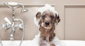 How To Get Rid of Dog Dandruff – A Guide to Causes and Treatments