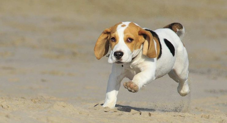 Adopting Vs Buying A Dog Or Puppy
