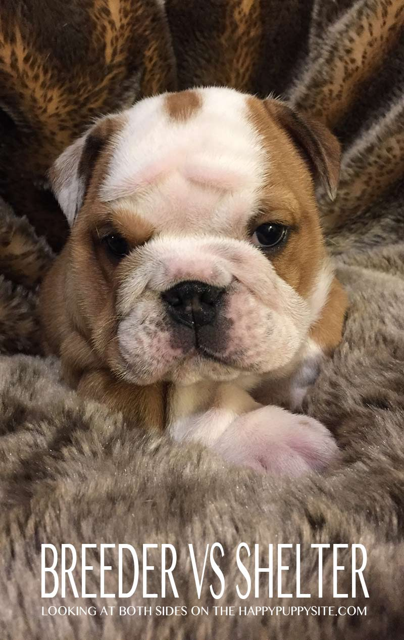 Adopting a dog vs buying from a breeder - pros and cons of both