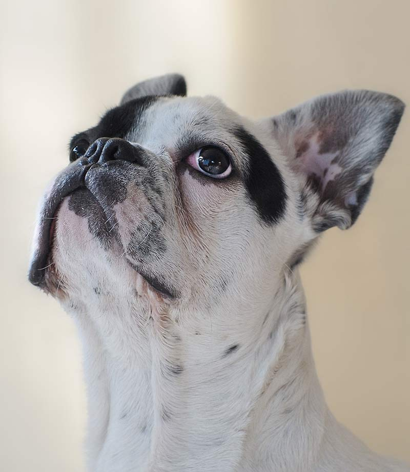 What does conformation mean to your dog - it can be an important indicator of health