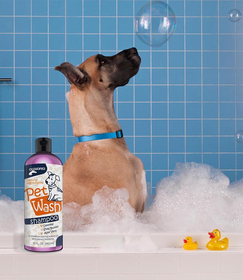 Dog Dandruff Shampoo