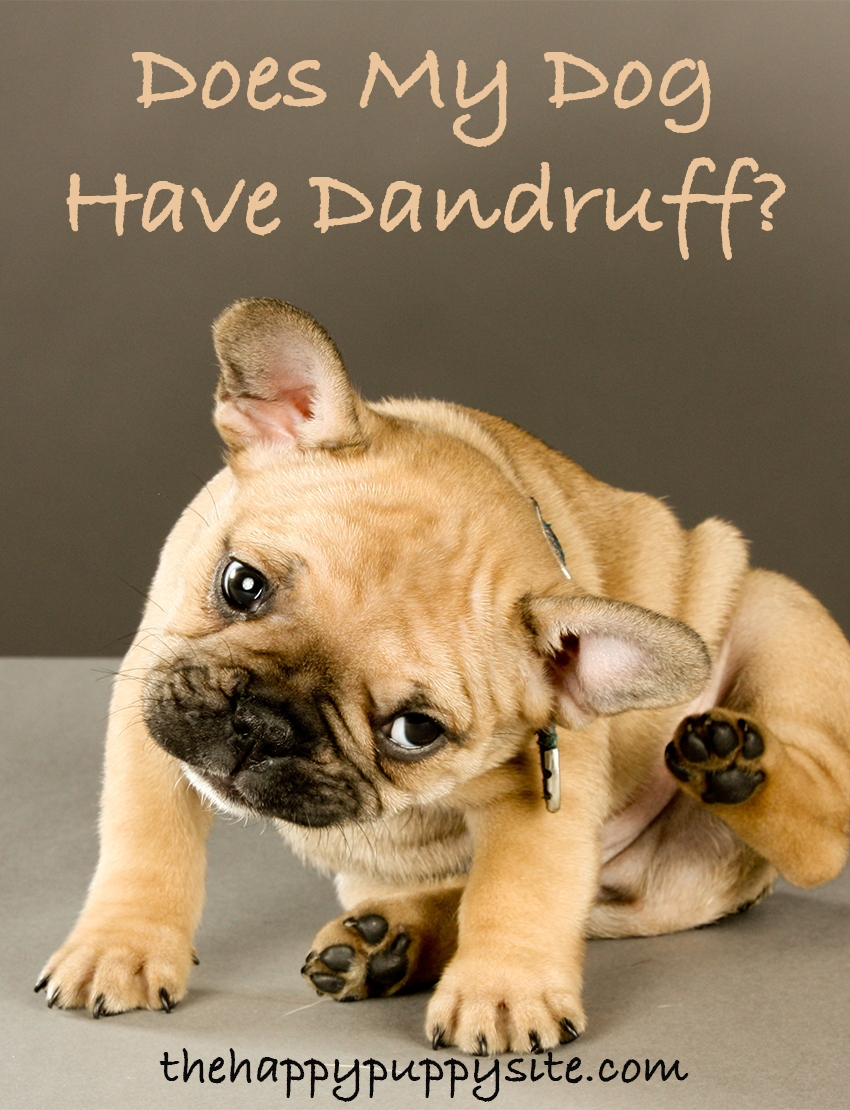 Does My Dog Have Dandruff? Let's find out!