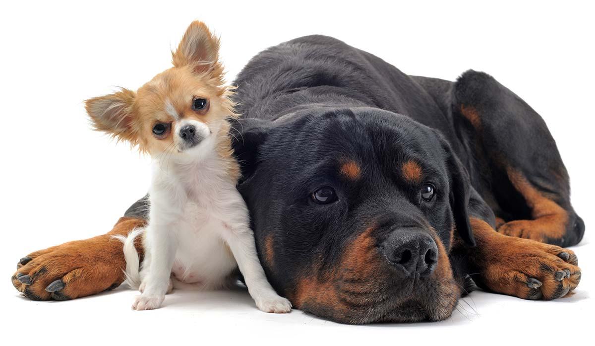 Dog sizes - top tips on choosing