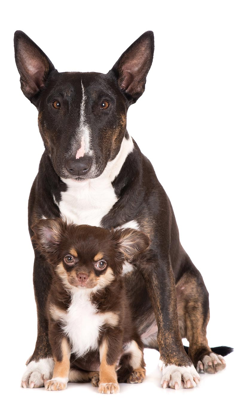 There is a link between dog size and longevity. Find out more on thehappypuppysite.com
