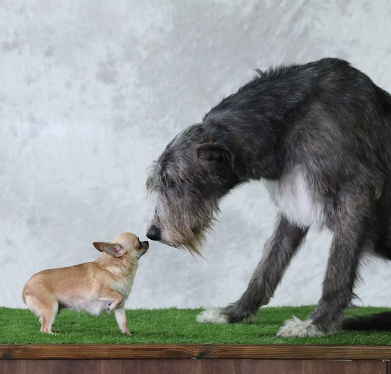 find out more about how dog size is linked to health on thehappypuppysite.com