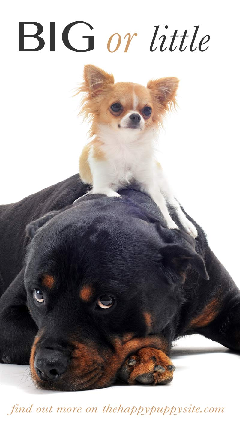Size does matter when it comes to dog breeds.