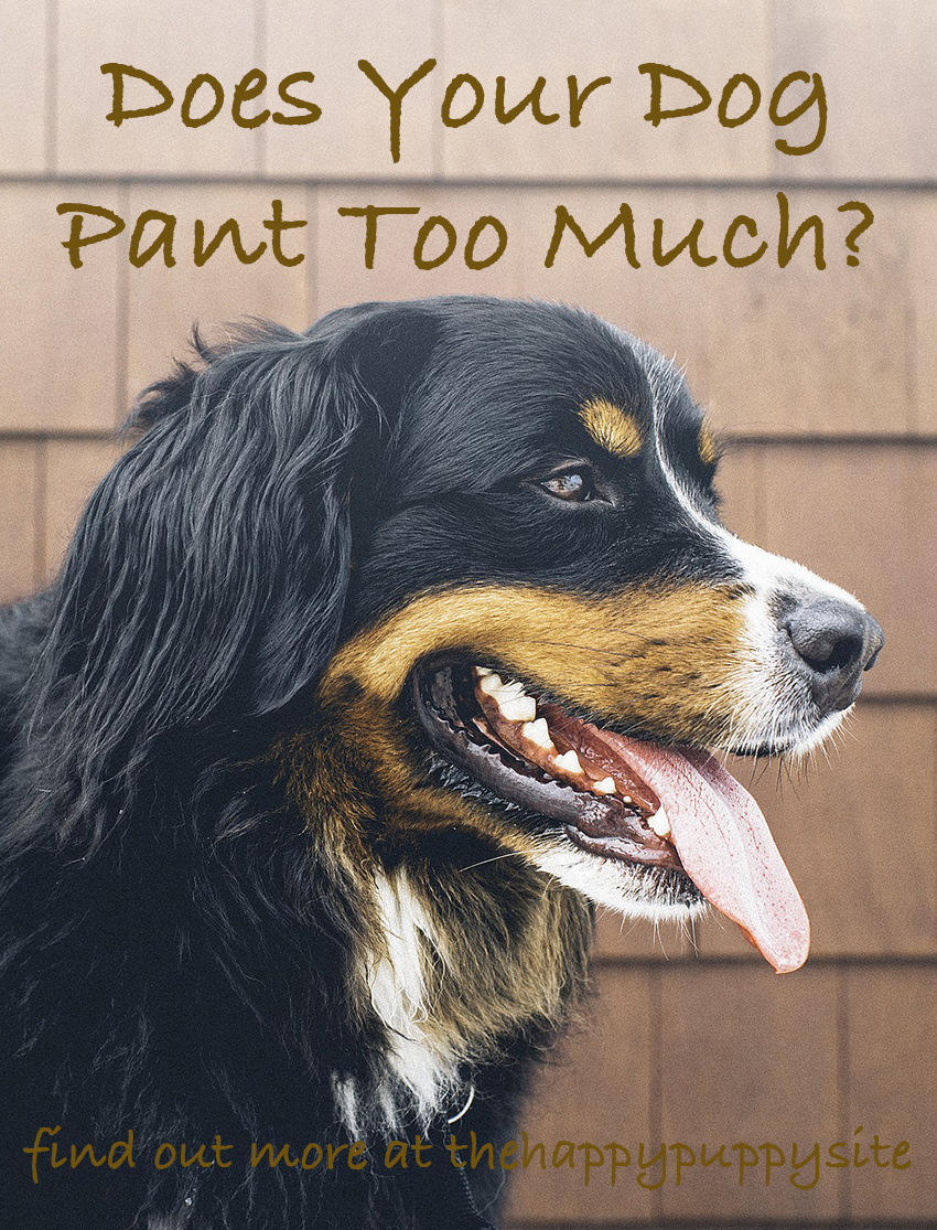 Excessive Panting In Dogs Can Be A Cause For Concern. We look at the possible reasons for dogs panting a lot, and what you can do to help them.