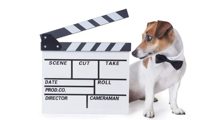 Famous Dogs – From History To Celebrity, Heroes To Fiction!
