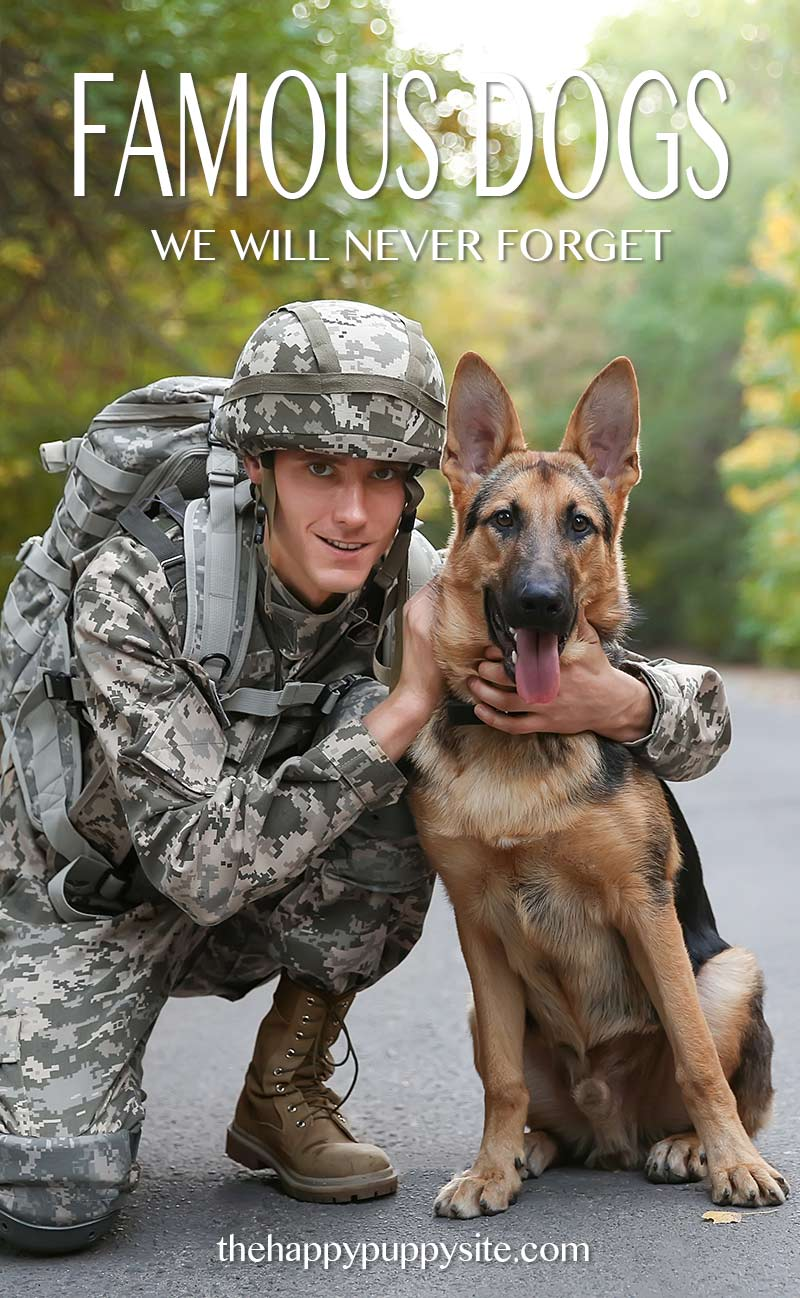 Famous dogs - our military and service heros, and their celebrity friends