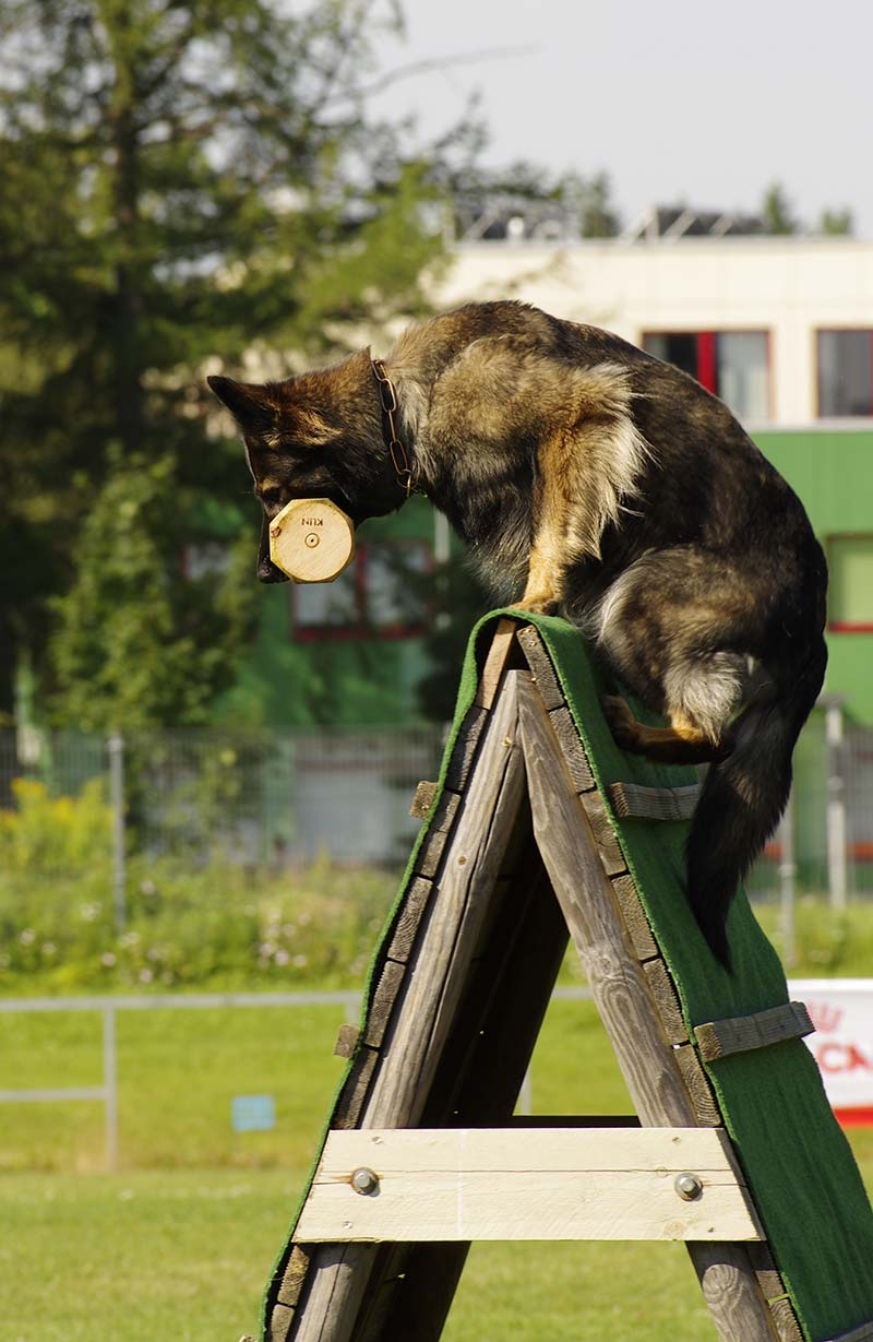 How to train a dog to jump - with safety tips and advice