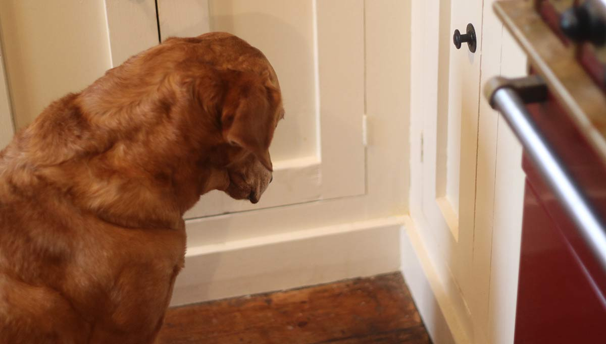 Why Is My Dog Staring At The Wall - A Guide To Wall Staring And Head
