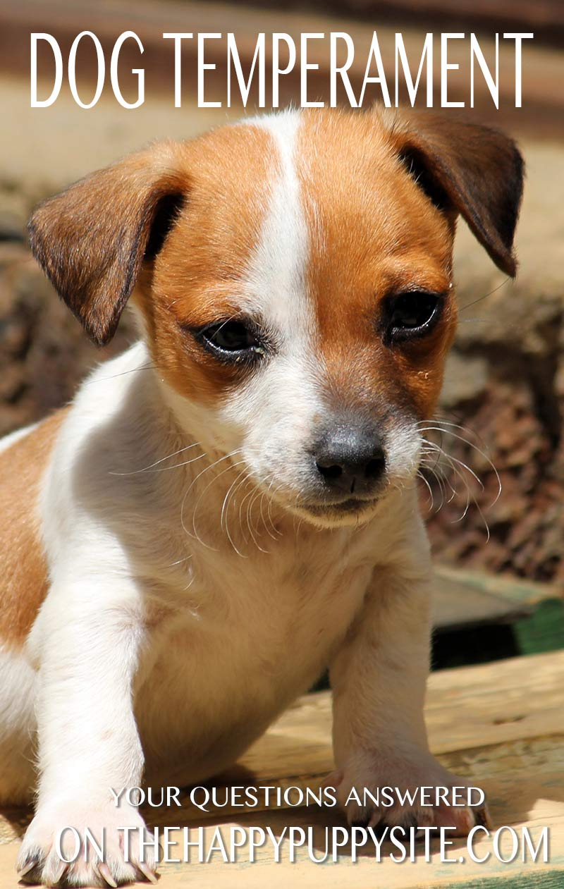 Should your dog take a puppy temperament test? We answer your dog temperament questions on thehappypuppysite.com