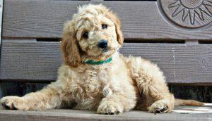 Dog Temperament – Choosing A Friendly Puppy