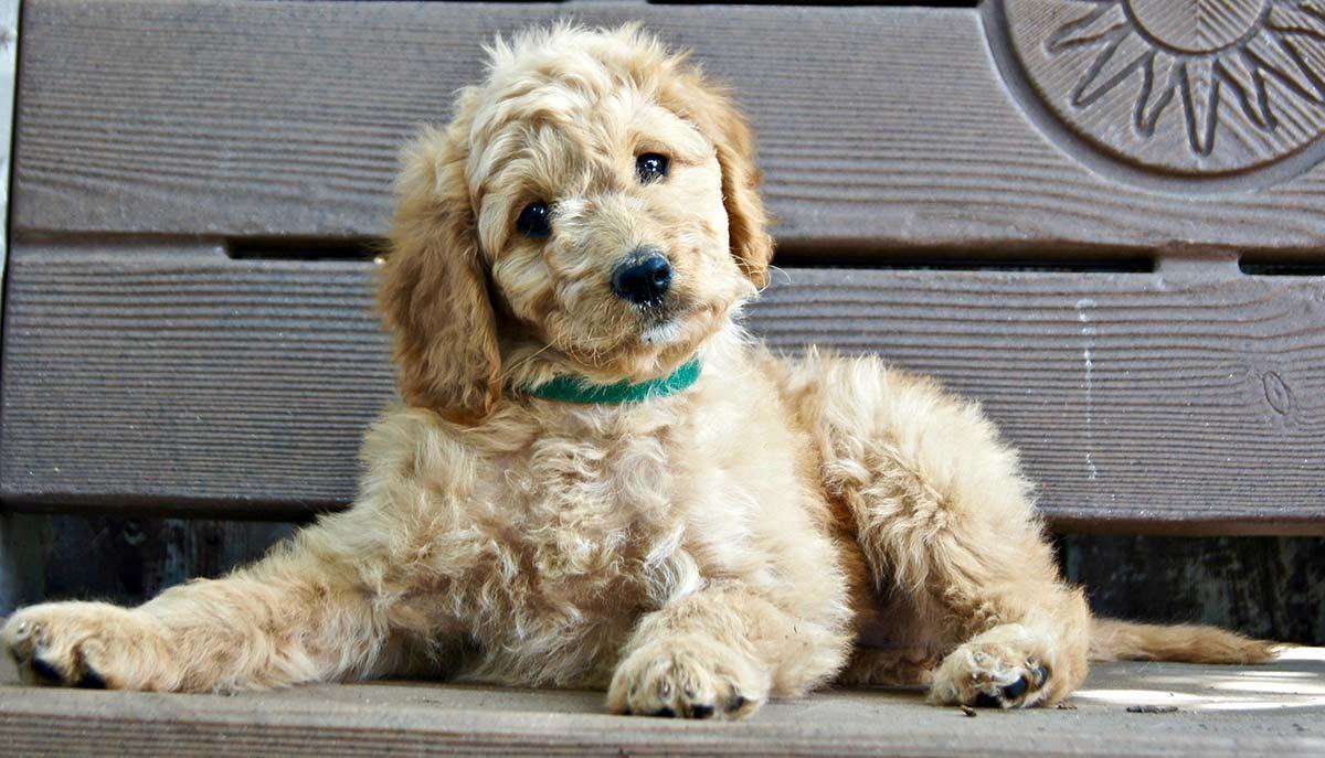 Dog Temperament - And choosing a friendly puppy