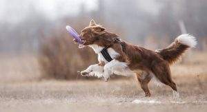 The Best Indestructible Dog Toys For 2017