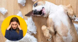 Best Indestructible Dog Toys – A Complete Guide With Tips And Reviews