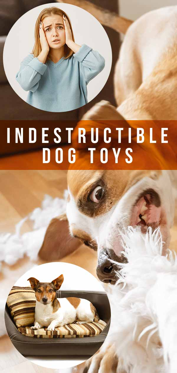 Best Indestructible Dog Toys - A Complete Guide With Tips And Reviews