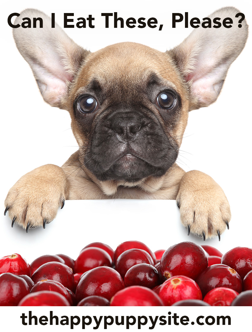 Can Dogs Have Cranberries? Let's find out!