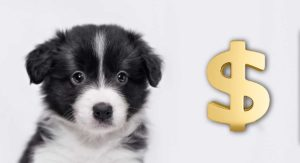 How Much Does A Dog Cost? The Costs of Buying and Owning a Dog