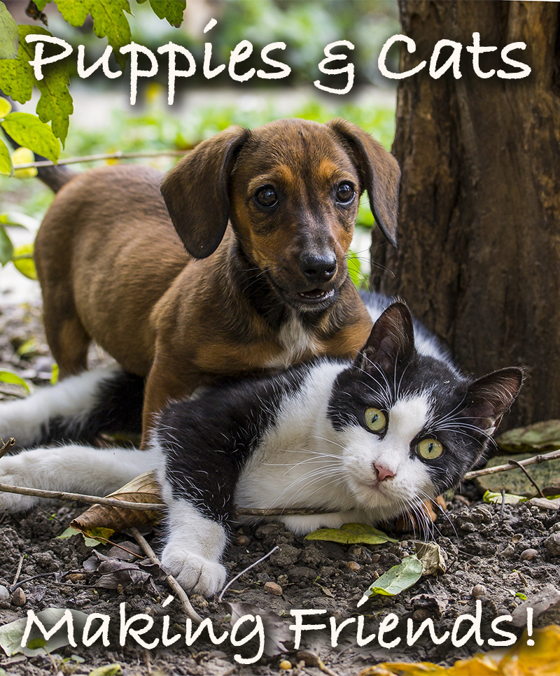 Can dogs and cats be friends? A guide to introducing a puppy to a cat