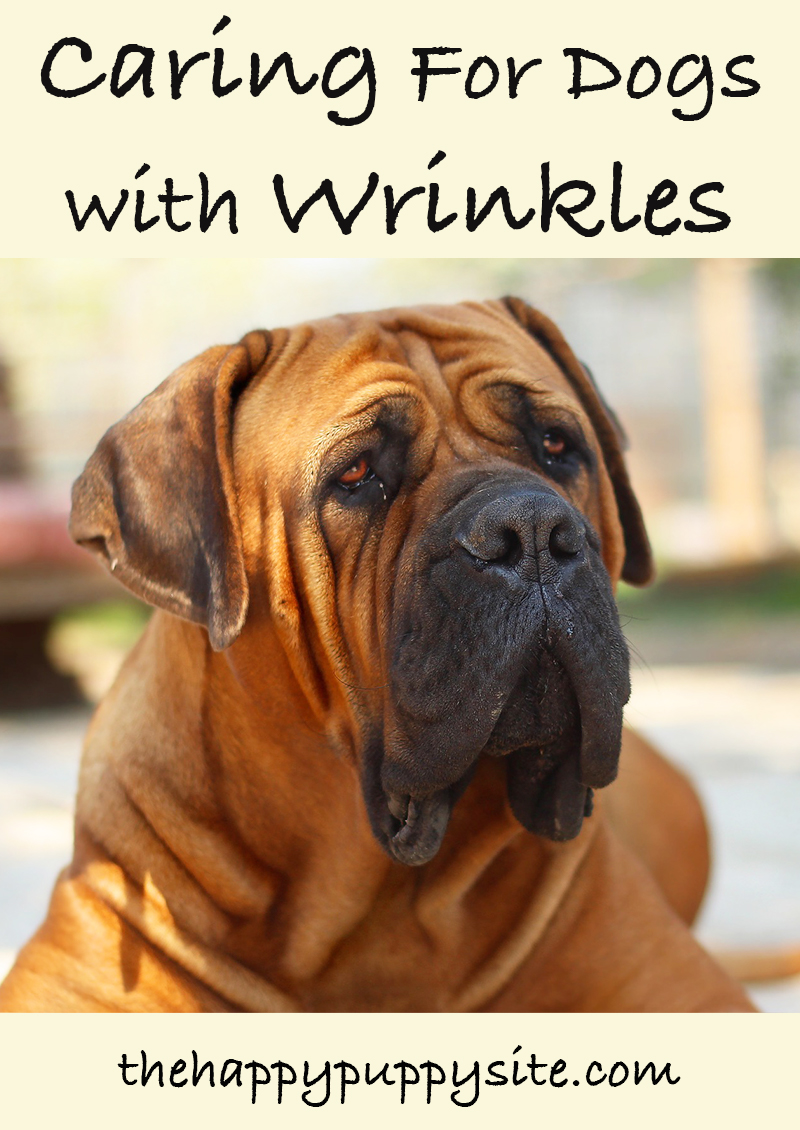 Caring for dogs with wrinkles is very important