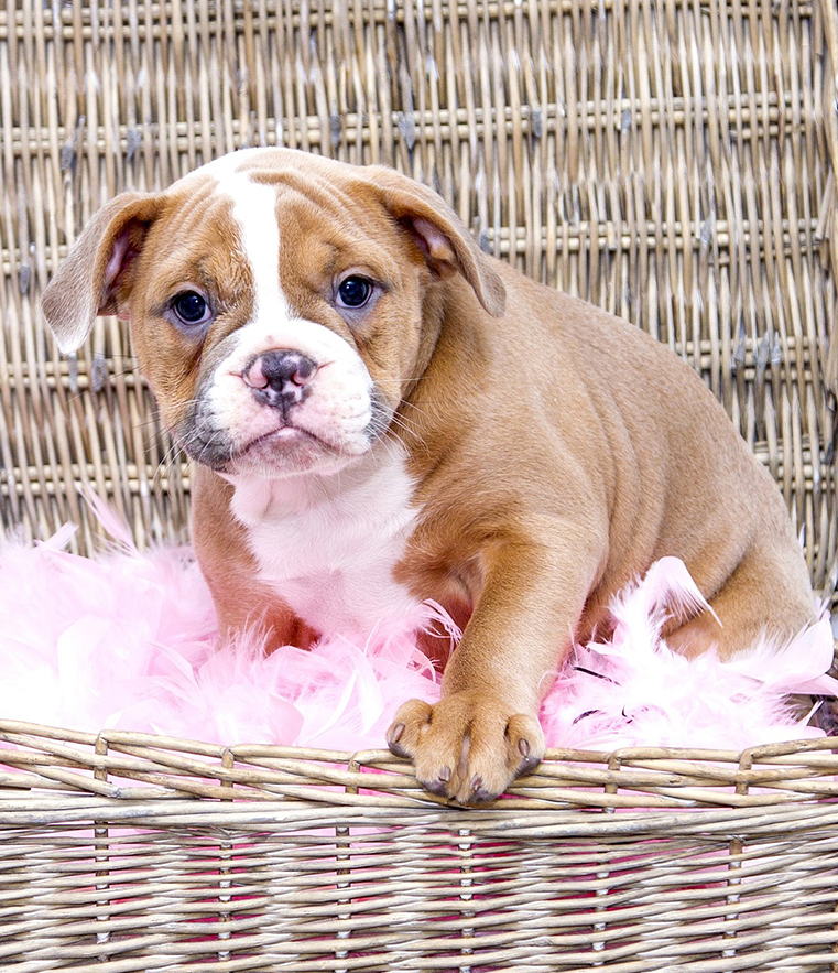 Puppy wrinkles are cute, but can be problematic if they don't grow into their skin