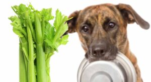 Can Dogs Eat Celery? Is Celery Good For Dogs Or Not?