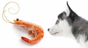 Can Dogs Eat Shrimp? Is Raw or Cooked Shrimp Safe For Dogs?